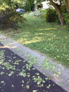 Yard full of debris after hail storm